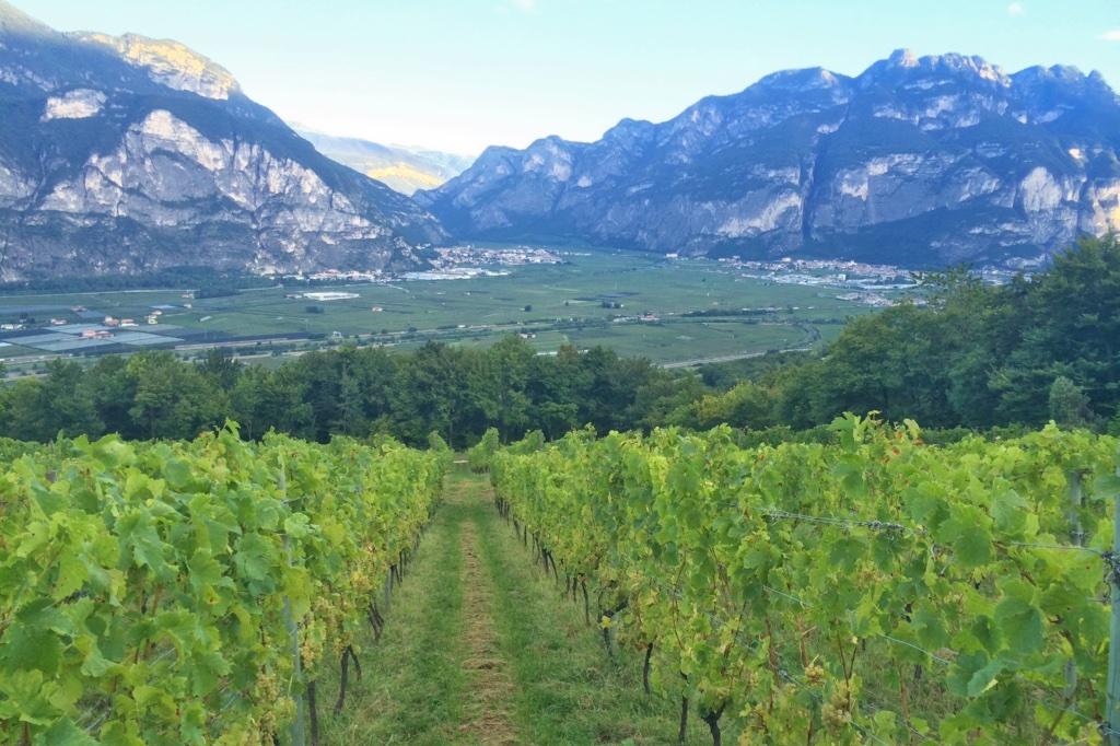 Zeni, tradizione e innovazione made in Trentino.